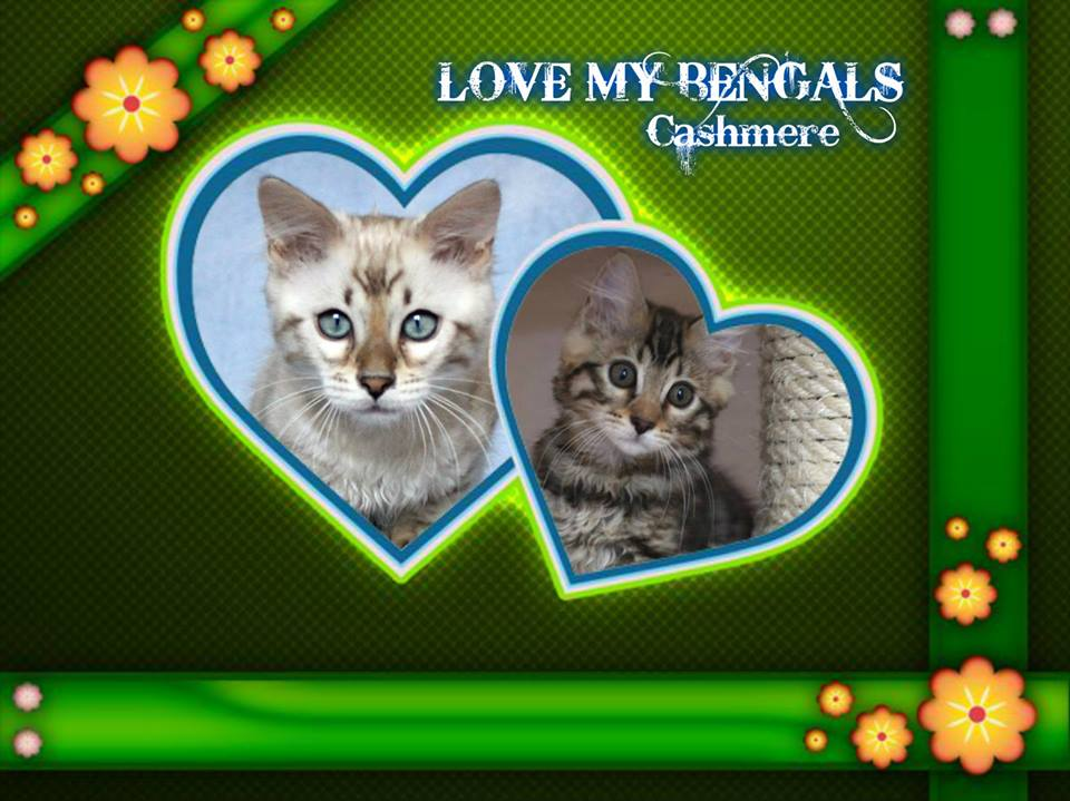 ANGELINO & LIZZY love my CASHMERES