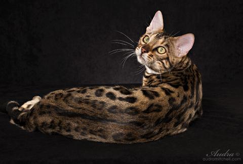 wilko sonic cat deterrent