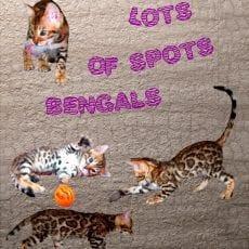 Lots-of-Spots-logo.jpg