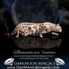 Dark Moon Bengals, RW SGC DarkMoon Diamonds Are Forever