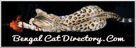 Bengal Cat Directory