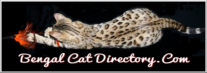 The Bengal Cat Directory – Resource for Bengal Cats, Kittens